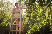 Young woman up on a ladder picking apples from an apple tree on a lovely sunny summer day - lit by w