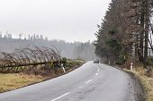 Car Safely Continous On A Road Cleared From A Fallen Tree. Fallen Tree Across A Road After Strong Wi poster