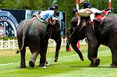Elephant Polo Games