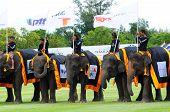 Elephant Polo Grand Opening