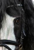 Tinker Pony Eye