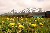 Dandelions And Mountains