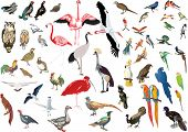 Ilustración con la colección de aves de color sobre fondo blanco