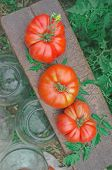 Canning Tomatoes In Glass Jars Outdoors poster