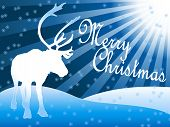 pic of caribou  - Beautiful Christmas card with a caribou or reindeer standing in the snow looking at the starlights with Merry Christmas wishes - JPG