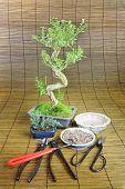 Bonsai Still life