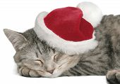 The Grey Cat Sleeps In A New Year'S Cap