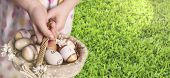 Easter Eggs In The Basket. The Girl Is Holding A Basket With Eggs. Horizontal Image. Basket With Egg poster