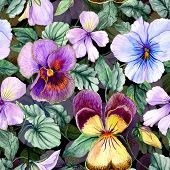 Beautiful Large Vivid Viola Flowers With Green Leaves On Dark Background. Seamless Spring Or Summer  poster