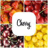 Collage From Different Varieties Of Sweet Cherry (colorful) - Square. Possibility To Write Text. poster