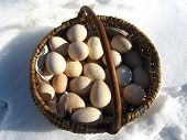 foto of turkey-cock  - Basket with eggs of the turkey standing on the snow - JPG