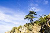 Landscape With A Pine Tree On A Cliff