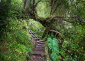 Giant tree in rain forest . Beautiful landscapes in Pumalin Park, Carretera Austral, Chile. poster
