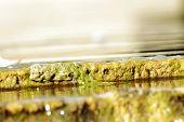 Scene Mosses And Aquatic Plants