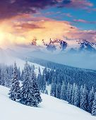 Attractive winter landscape and covered snow trees. Dramatic wintry scene. Carpathian, Ukraine, Euro poster