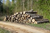 A pile of logs in the forest near road
