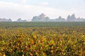 Morning Light In The Vineyards Of Saint Georges De Montagne Near Saint Emilion, Gironde, France poster