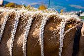 Braided Horse Mane - Blond Mane Horse With Braids . poster