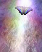 Transformation Metaphor Butterfly Moving Into The Light - A Multicoloured Butterfly Leaving A Trail  poster