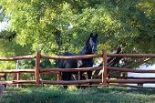 Beautiful Young Andalusian Stallion Heard The Mares In Autumnal Corral Nearby poster