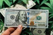 American Dollar Bill On Cannabis Leaves. Taxation And Marijuana. The Economy Of Hemp Industry. Tax O poster