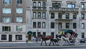 picture of carriage horse  - NEW YORK CITY  - JPG