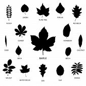 image of biodiversity  - Vector collection of leaf silhouettes isolated on white background - JPG