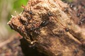 Anthill Close Up