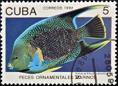 A stamp printed in Cuba dedicated to ornamental fish shows Holacanthus isabelita