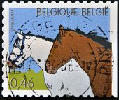 A stamp printed in Belgium shows two horses