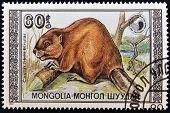 Un sello impreso en Mongolia muestra imagen de un castor (Castor fibra birulai)