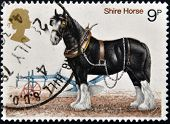UNITED KINGDOM - CIRCA 1978: A stamp printed in Great Britain shows image of shire horse, circa 1978
