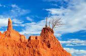 Cactus On Rocky Outcrop