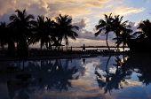 Palm Trees By Beach
