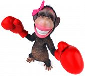 picture of transexual  - Fun monkey - JPG