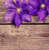 Violet Flowers On Wooden Background