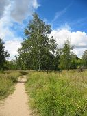 Path In A Summer Park. Landscape