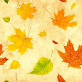 Seamless grunge background with flying autumn leaves of a birch, maple and barberry