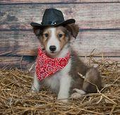 Cute Little Cowboy Puppy