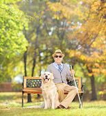 Senior blind gentleman sitting on a wooden bench with his labrador retriever dog, in a park, shot wi