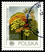 Vintage  Postage Stamp. Norway Maple, Environment Emblem.