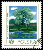 Vintage  Postage Stamp. White  Willow.