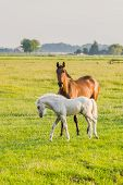 Brown Horse With White Foal