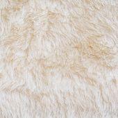 White Fur Of Polar Bear Texture Background
