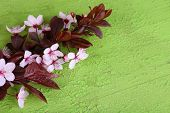 Blooming tree branch with pink flowers on wooden background