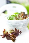 stock photo of spinner  - Salad spinner with iceberg and red lettuce diet concept - JPG