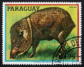 Postage Stamp Paraguay 1984 Peccary, New World Pig