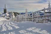 Snow And Trees In Winter On Sunny Day, Poiana Brasov, Romania