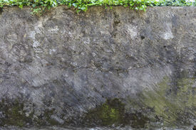 image of musky  - musky and dirty wall with edera growing on top - JPG