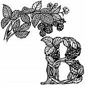 Blackberries on a branch B